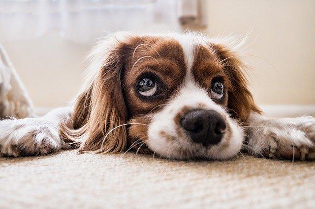 Kann ein Hund trauern?